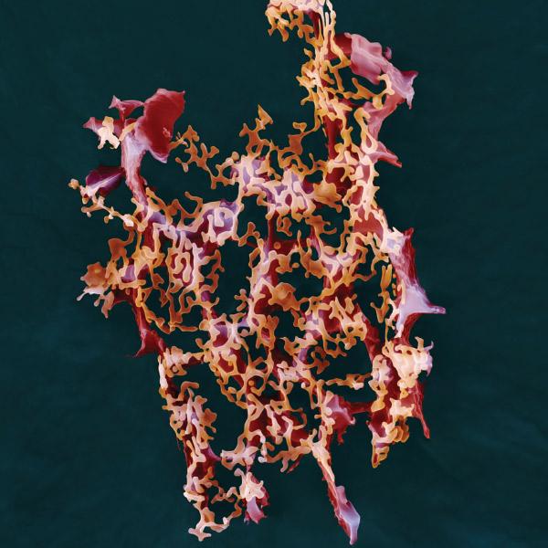 Bacteria Graphic