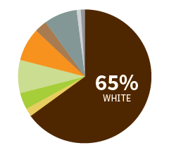 Pie chart showing ethnicity of students by percentage
