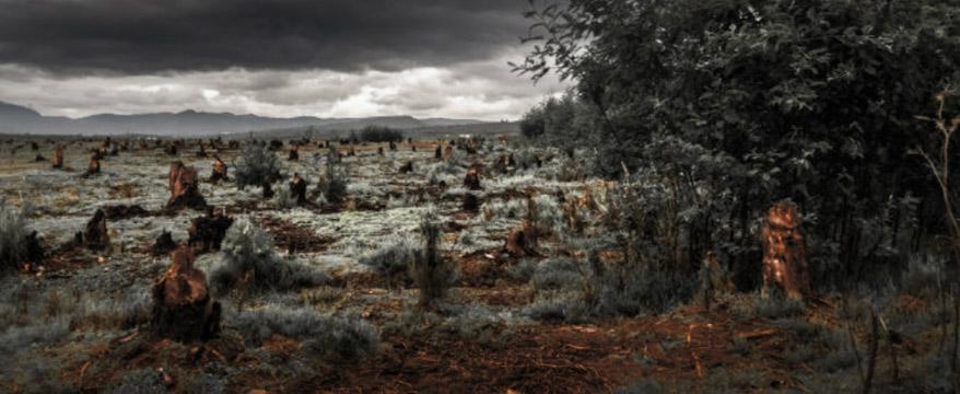 Study Links Deforestation and Malaria