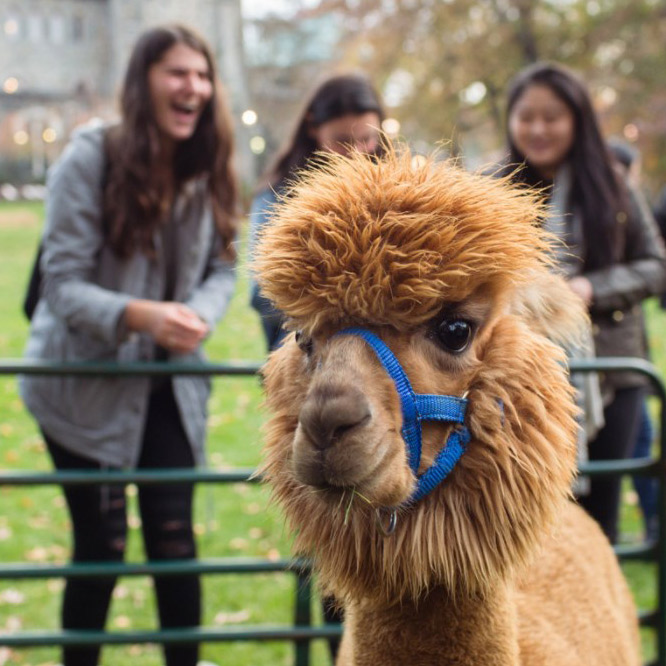 Students enjoyed a small on-campus petting zoo as part of Fall Fest.