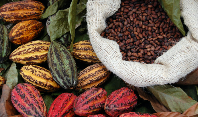 Professor Mark Noble Links Chocolate Trade to Loss of Forests in Poor Nations