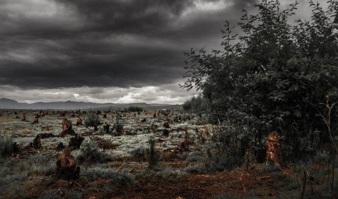 Deforestation in Sub-Saharan Africa