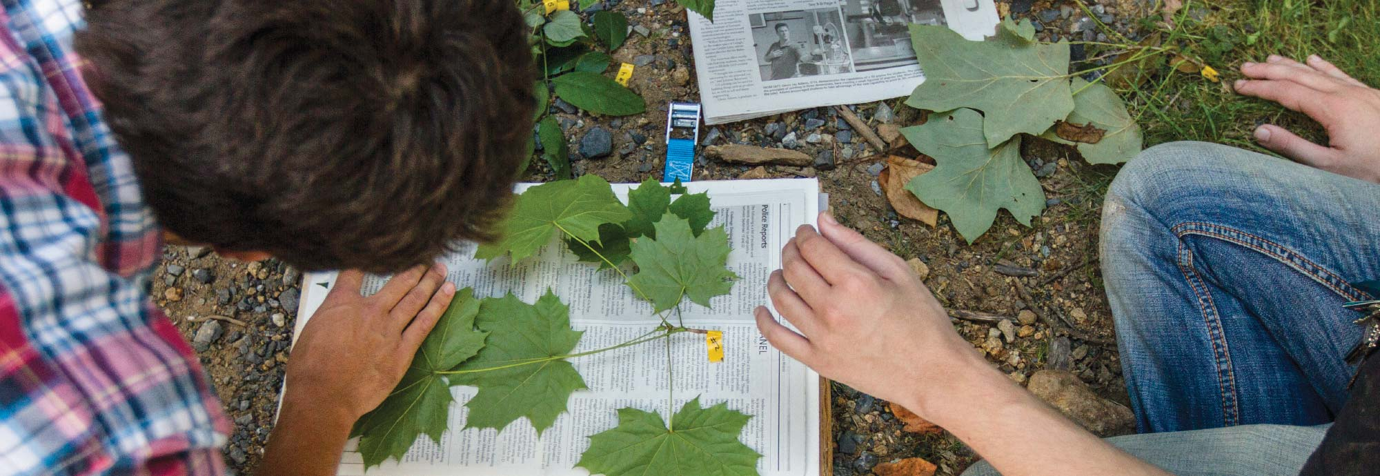 Students studying leaves in a forest