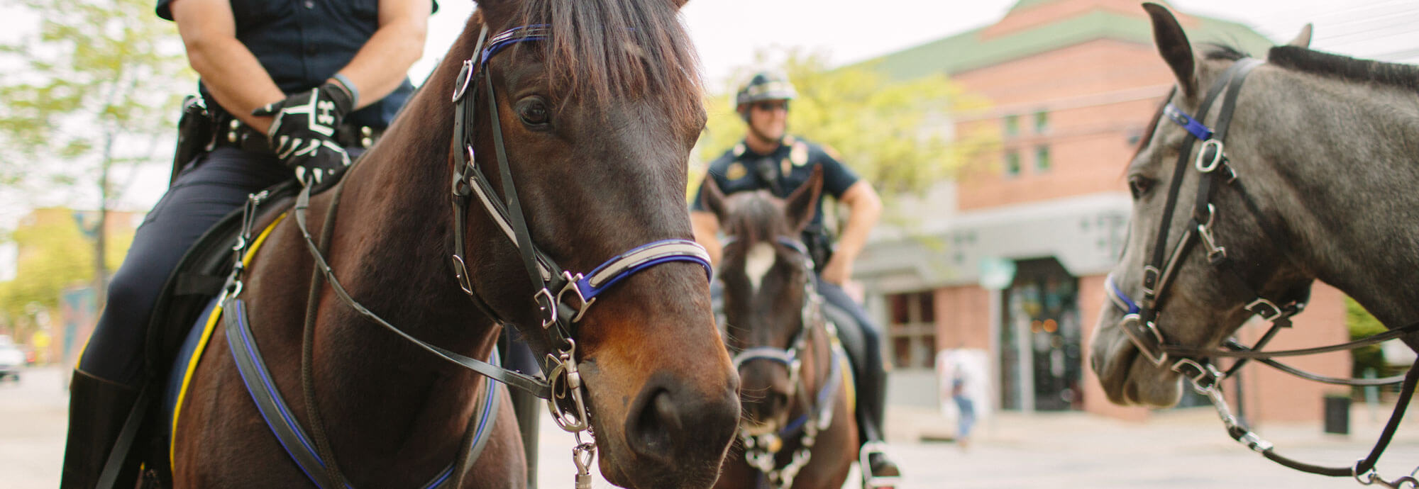 LUPD on horses