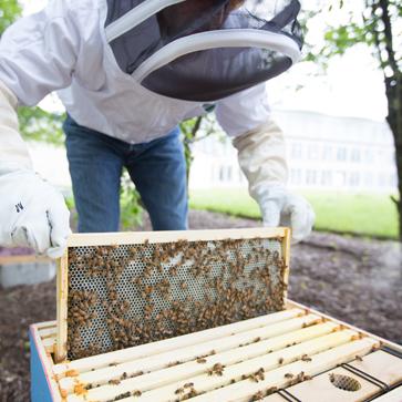 Lehigh's apiary