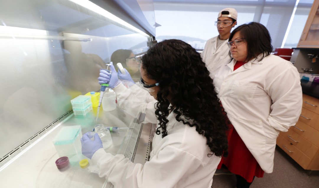 RARE student Sareena Karim '22, forefront, works in the Chow Lab led by Lesley Chow, assistant professor of bioengineering and materials science and engineering.
